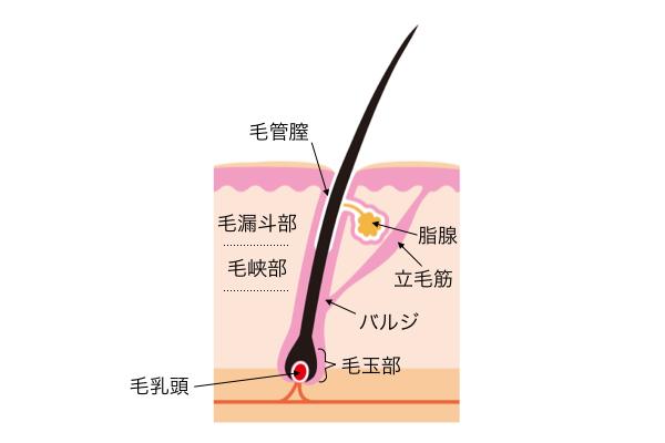 手法の構造